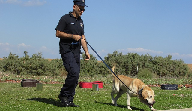The Benefits of Having Canines Trained Like Police Dogs